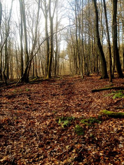 Auf der Suche nach der Forstscheune verlasse ich den Netzbachpfad und stapfe mitten durch den Wald