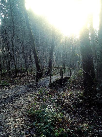 ...in einen zwar nicht stillen, aber optisch beeindruckenden Wald hinein
