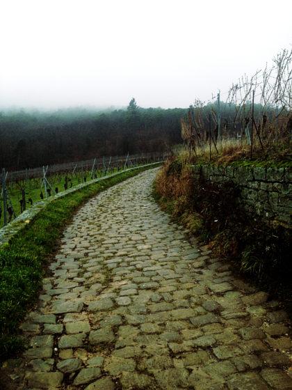 ...und weiter auf dem Pfälzer Weinsteig...