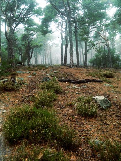 Ein Chaos aus Steinen, Büschen und Ästen, mal mehr, mal weniger