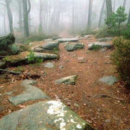 Buchstäblich über Stock und Stein