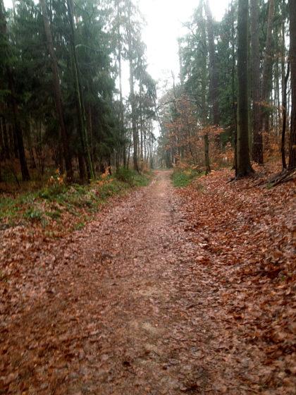 Ich habe den Wanderpfad Richtung Silbertal verlassen...
