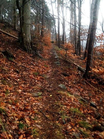 ...aber jetzt will ich in erster Linie zurück nach Neustadt, um nicht in der Dunkelheit in einem unbekannten Wald herumirren zu müssen