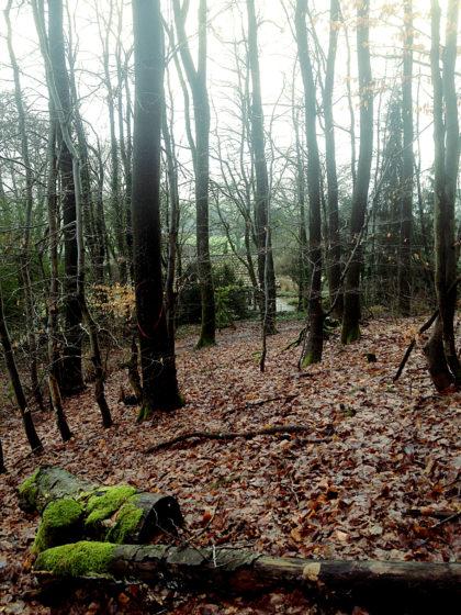 Mitten durch den Wald