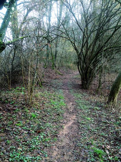Auf dem Biberpfad werde ich insges. ca. 7 Km zurücklegen