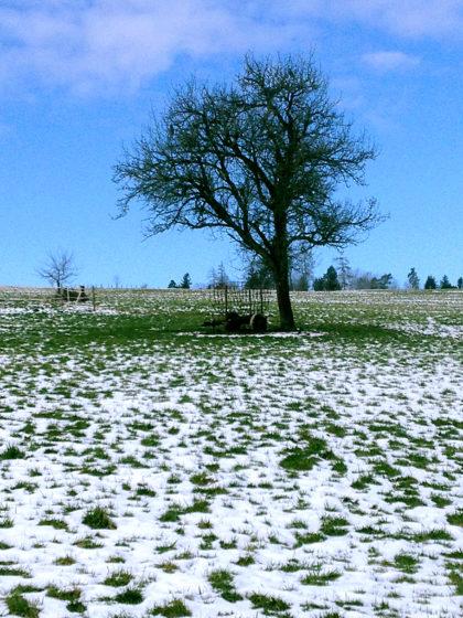 Wintertagidylle mit Baum und Landwirtschaftsutensil
