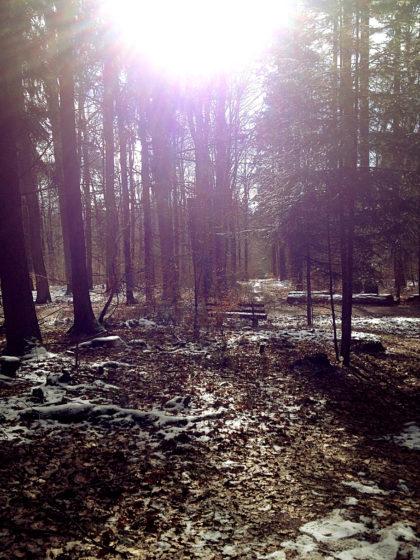 Auch im Wald immer helleres Licht