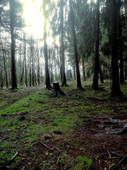 Moosteppiche, Wurzelgebilde, Baumskulpturen