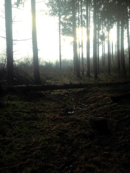 Ich steige über einen Baumstamm hinweg, durchquere ein Dickicht...