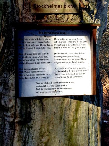 Die sage und schreibe 1500 Jahre alte Stockheimer Eiche