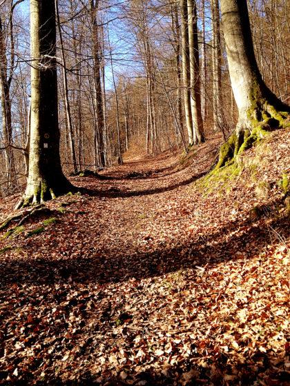 Was für ein heller, wunderbarer Wald!