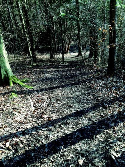 Die letzten Meter durch den jetzt schattendunklen Wald