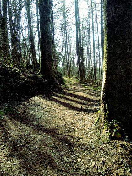 Der Pfad fließt zwischen den Bäumen dahin