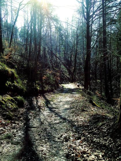 Der Wald wird etwas dichter und dunkler