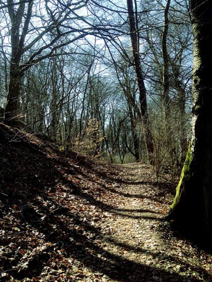 Von allen Seiten strömt Licht in den Wald