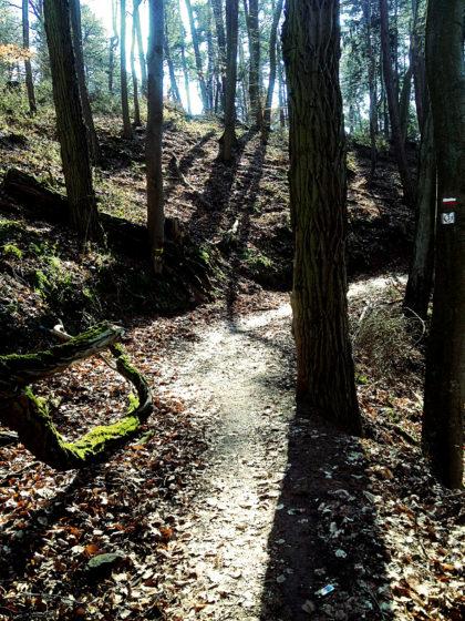 Diese sechs Kilometer zwischen Spicheren und Forbach sind die schönste Passage an diesem Tag