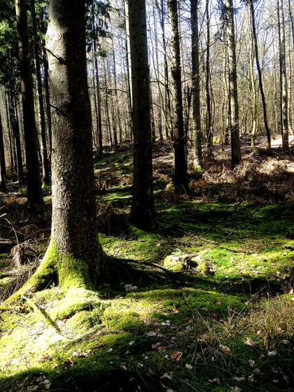 Wie ein überwucherter, sich selbst überlassener  Landschaftsgarten