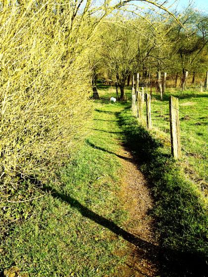 Der Jakobsweg führt jetzt abenteuerlich zwischen Gärten hindurch