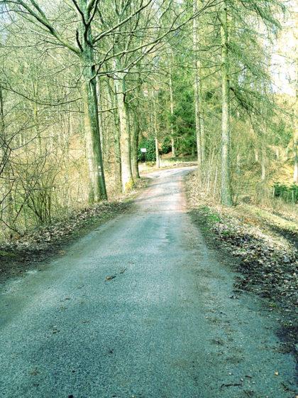 Vom Gollenstein laufe ich hügelab, überquere eine Landstraße und trabe dann in den Wald hinein