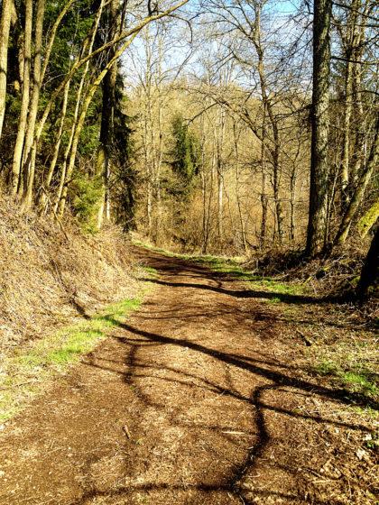 Bergab durch hellen, lichten Wald