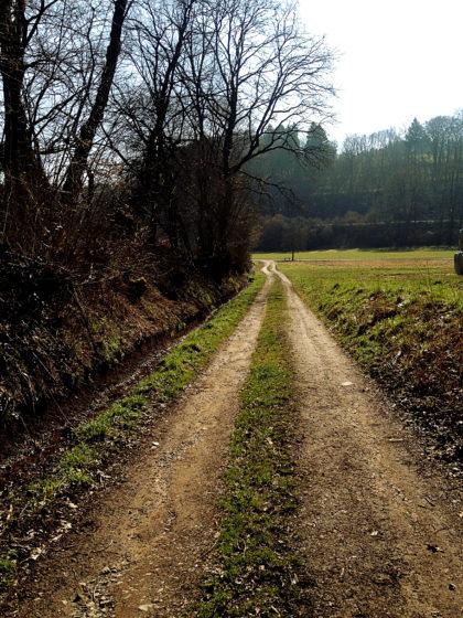 An Pferdekoppeln vorüber auf das Dorf Alschbach zu