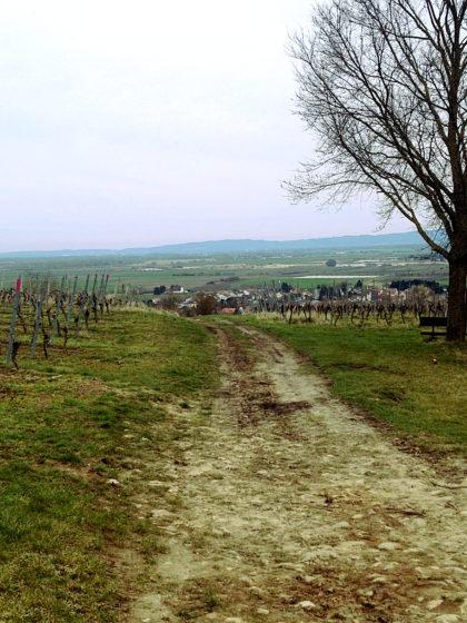 Auf Mettenheim zu, wo die 2. Etappe des Rheinterrassenweges nach knapp 10 Kilometern endet