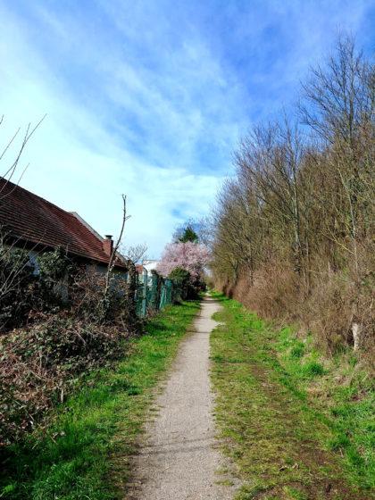 Auf schmalem Pfad an Osthofen vorüber
