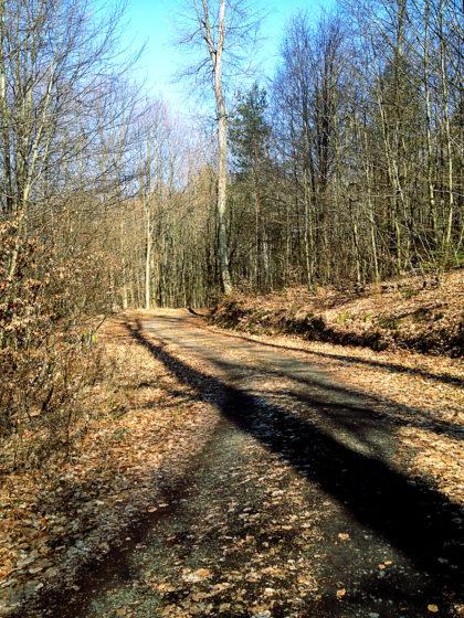...von dem ich jetzt aber abbiege und auf einen lokalen Wanderweg Richtung Kirkel wechsle. Mehr als 2 Kilometer sind es ohnehin nicht mehr