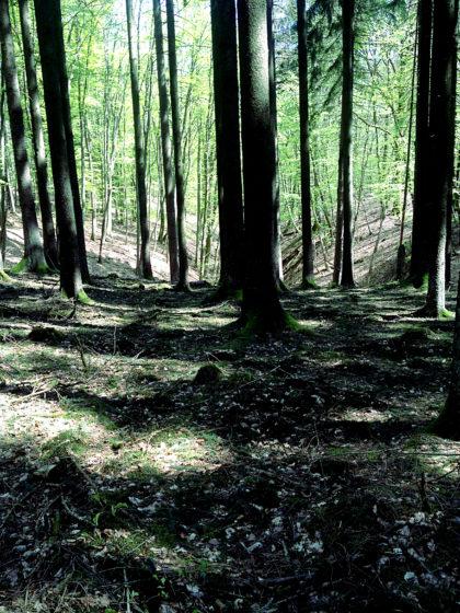 Mehr Schattenareale