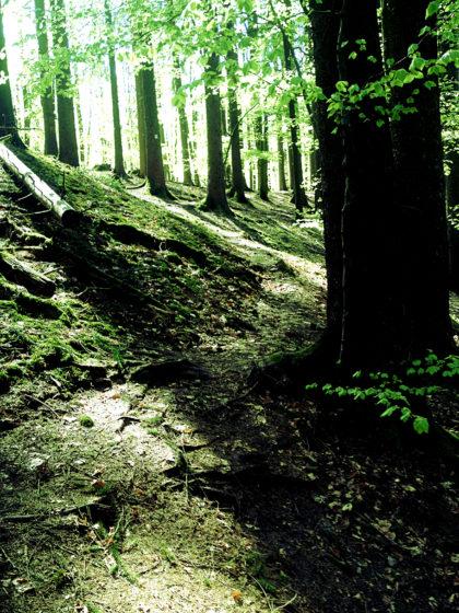 Grünsamtene Schatten und geschwungene Pfade