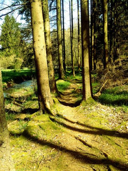 Schönheit der Natur nahezu in Perfektion