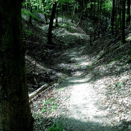 Schattiger Frühlingswald