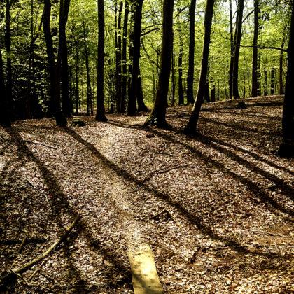 Der Rötelsteinpfad ist ca. 15 Km lang und ein Großteil davon verläuft durch Wald