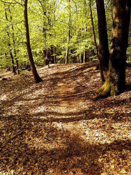 Dann wieder Lichtwald