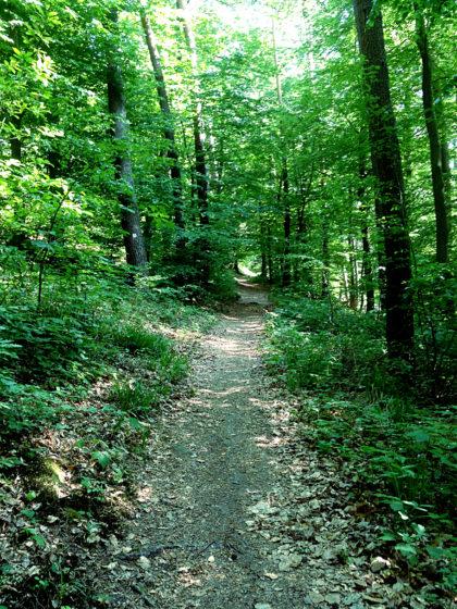 Auf den ersten Kilometern führt der Pfad fast ausschließlich bergauf