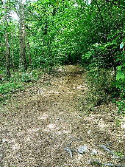Bis jetzt bewege ich mich in erster Linie durch Wald...
