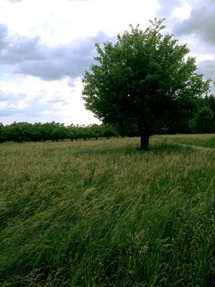 Der Wind verfängt sich im Gras