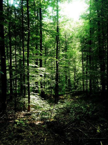 Tolles Licht, toller Wald