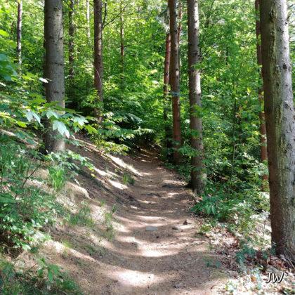 Wunderbarer Wald