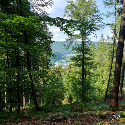 Zwischen den Bäumen hindurch wieder der Blick auf den Fluss