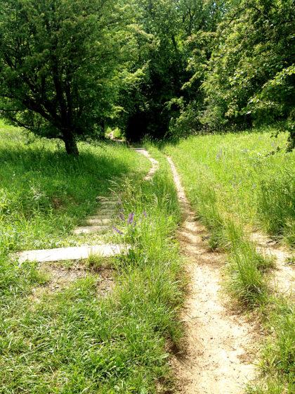 Der Plattenberg, ein durchaus besonderer Naturraum unmittelbar oberhalb von Kleinwallstadt