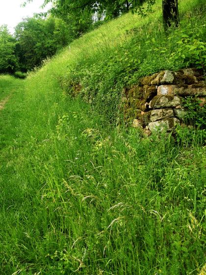 Grasüberwucherte alte Weinbergmauer