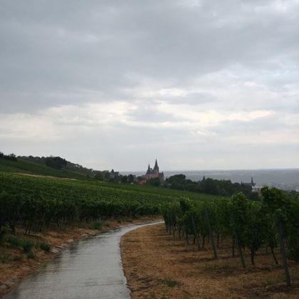 Der Regen hat begonnen; von weitem sehe ich bereits die Katharinenkirche von Oppenheim