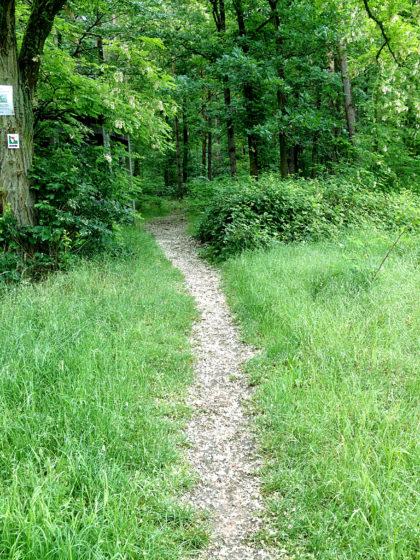 Endlich Wald - links am Baum das Symbol des Fränkischen Rotweinwanderwegs, nach dem ich mich zunächst richte