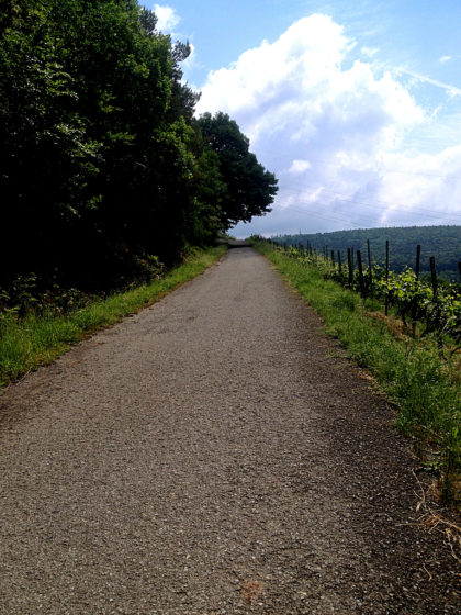 Auf den Wald folgen die Weinberge