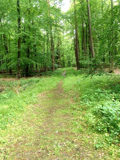 Wieder unterwegs und wieder im Wald