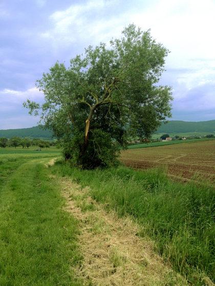 Der Wiesenpfad nimmt kein Ende
