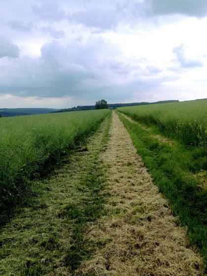 Ich nähere mich Röllbach...
