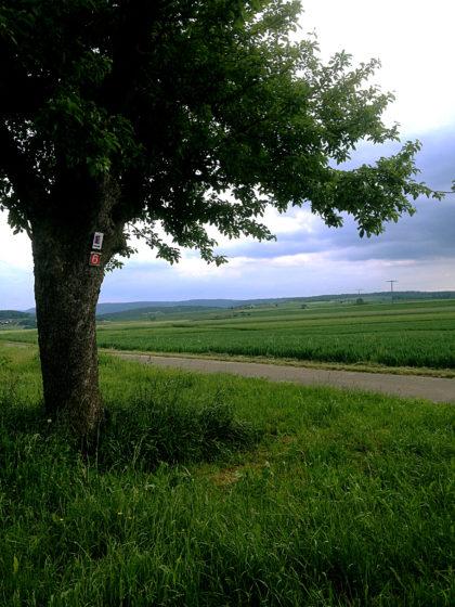 Wunderbarer Blick in die Landschaft