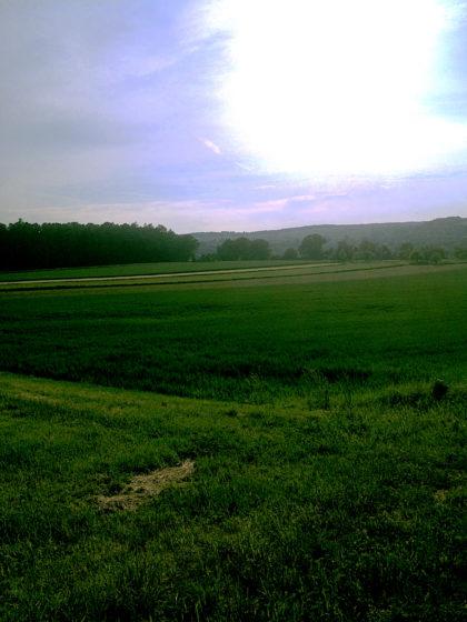 Sonne über den Wiesen...